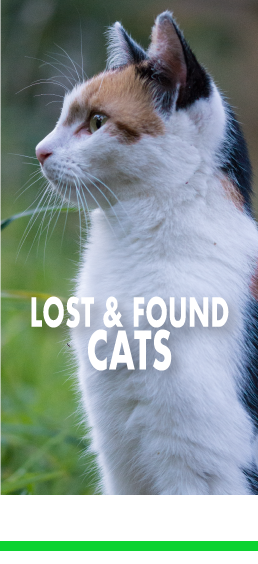 Lost and Found Cats