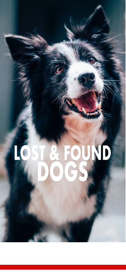 Lost and Found Dogs