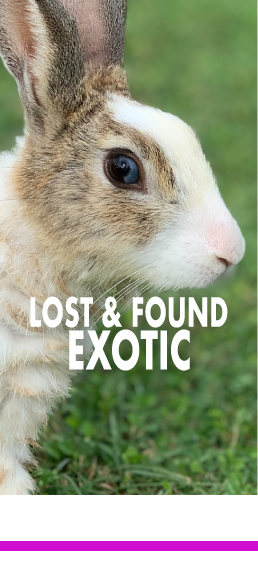 Lost and Found Exotics
