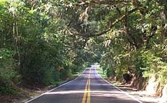 A Canopy Road & Planning | Environmental Planning | PLACE