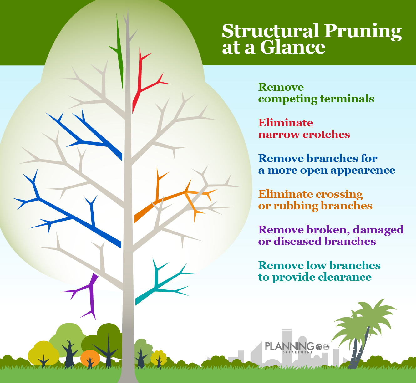 Use this graphic as an at-a-glance guide to help  you as you begin structural pruning.