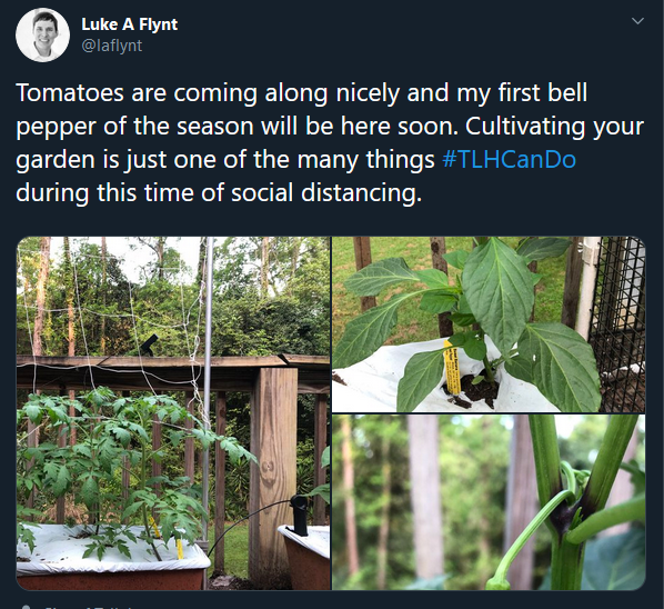 Tomatoes are coming along nicely and my first bell pepper of the season will be here soon. Cultivating your garden is just one of the many things TLHCanDo during this time of social distancing.
