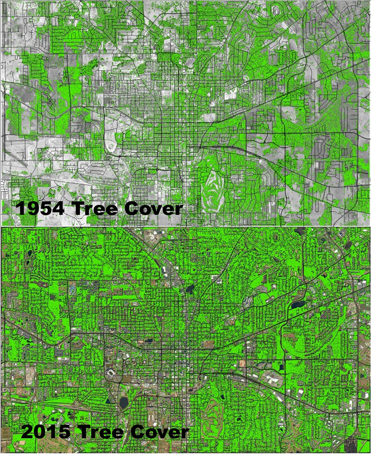 Tree Cover Image