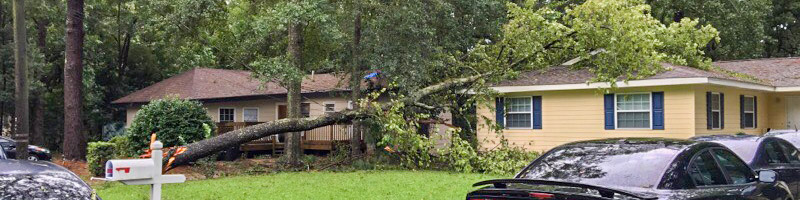 A tree that has come down in a storm and landed on a house's roof.